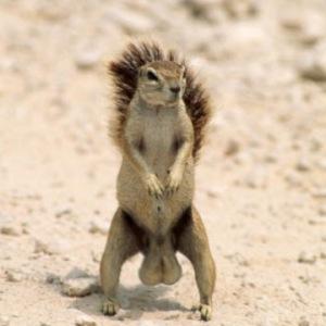 Not as ballsey as this little fella, though.